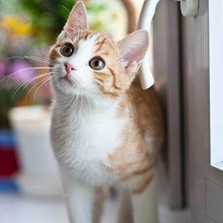 Indoor cats need a life too