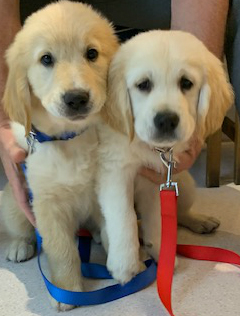 The importance of puppy pre-school